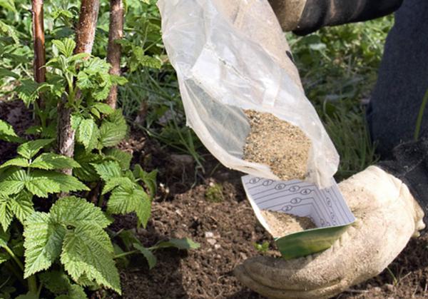 Подкормка народными средствами и комплексным удобрением