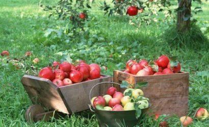 Лунный посевной календарь на август 2018 года для садоводов, огородников, цветоводов с таблицей