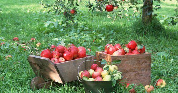 Что делать садоводу в августе