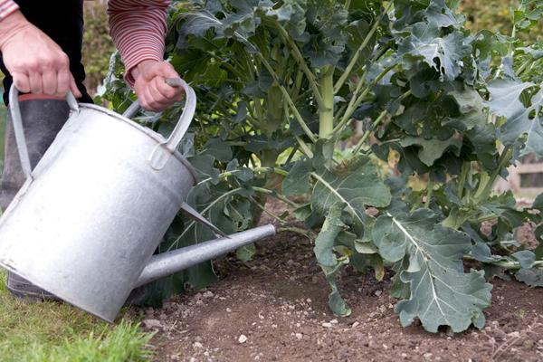Что делать садоводу в июле