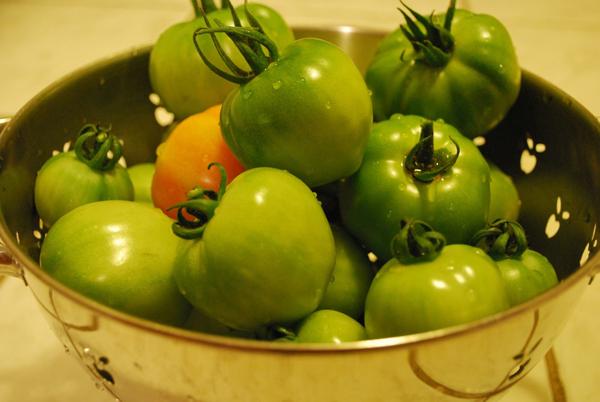 Подготовка помидор к заготовке