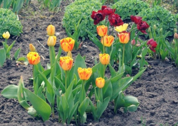 Полезные советы для цветоводов