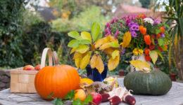 Лунный календарь на октябрь 2018 года для садоводов