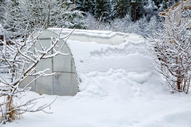 Благоприятные и неблагоприятные дни в декабре 2018 года для садоводов