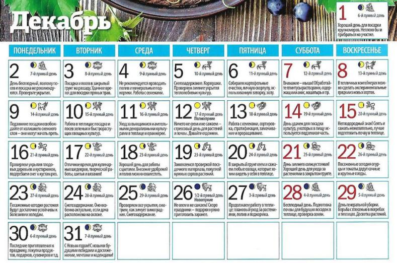 Лунный посевной календарь садоводов и огородников на декабрь 2019 (таблица)
