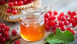 Калина с мёдом на зиму - простые рецепты. При простуде, от кашля