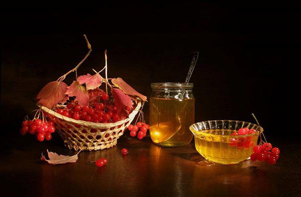 Польза и вред калины с медом