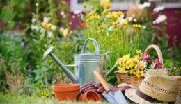 Лунный календарь для садовода, огородника на 2019 год
