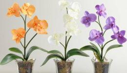 Чем подкормить орхидею в домашних условия, чтобы цвела