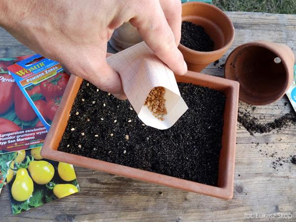 Благоприятные дни для посева томатов на рассаду в 2019 году по Лунному календарю