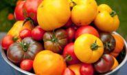 Лучшие сорта помидоров 2019: отзывы, фото и описание для открытого грунта и теплицы