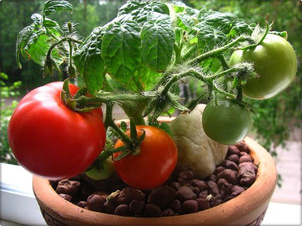 Для выращивания на подоконнике