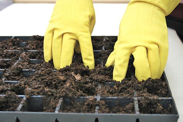 Подготовка грунта для посева лобелии