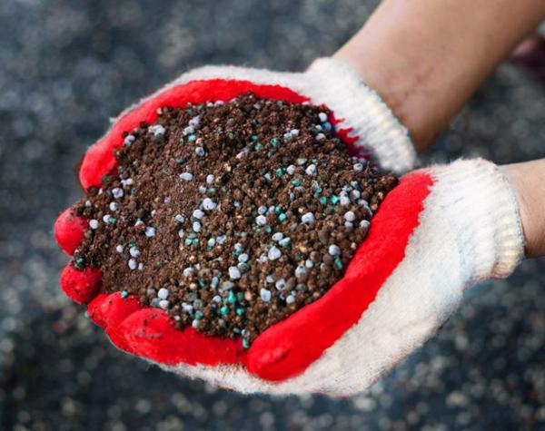 Почва и условия для выращивания картофеля