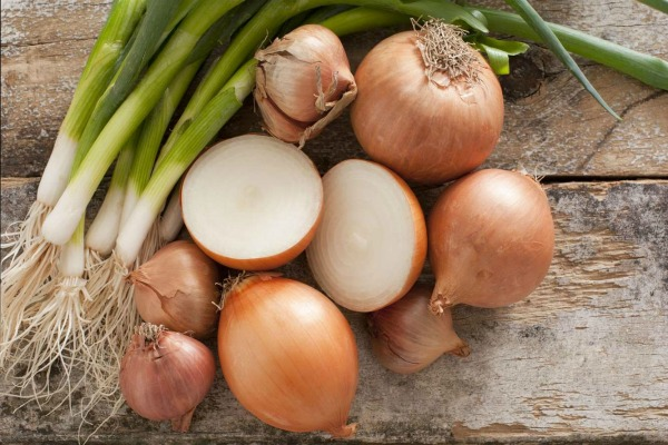 Как вырастить лук репку за один сезон через рассаду