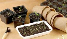 Что посадить в апреле на рассаду Какие овощи и цветы сеять в преле 2019