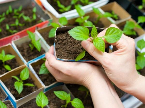 Советы бывалых садоводов