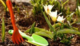 Лунный посевной календарь на апрель 2019 года для садоводов, огородников, цветоводов Таблица