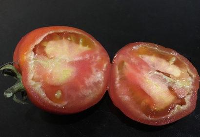 Почему помидоры внутри белые и жесткие. Можно ли их есть