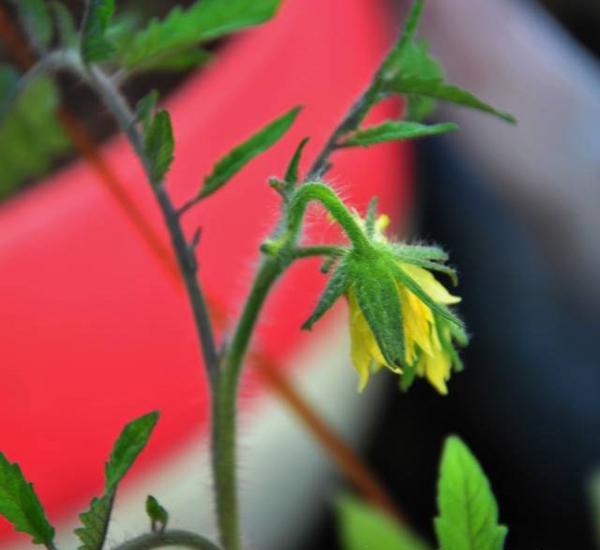 Последствия раннего цветения