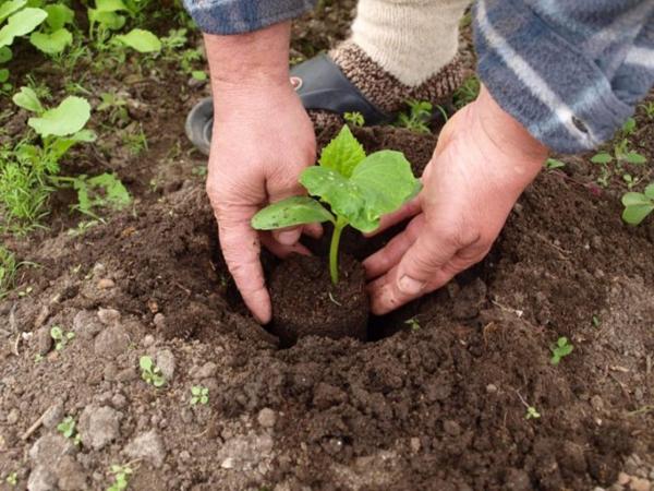 Что делать садоводам в мае