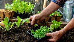 Лунный календарь на май 2019 для садоводов по дням
