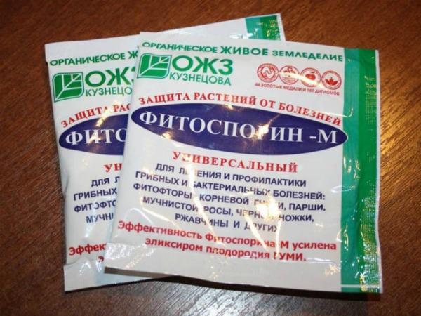 Бактериальные препараты