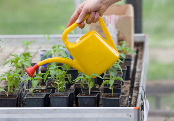 Нарушение агротехнического процесса