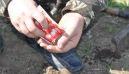 Когда сажать редиску весной в открытый грунт. Уход после посадки