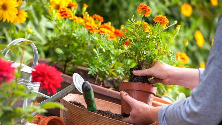 Что делать садоводам, огородникам, цветоводам в июне