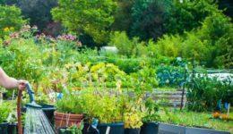 Миниатюра к Лунный посевной календарь на июнь 2019 для садоводов, огородников, цветоводов