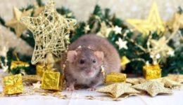 Как встречать Новый год 2020 Крысы в каком наряде и какое должно быть меню